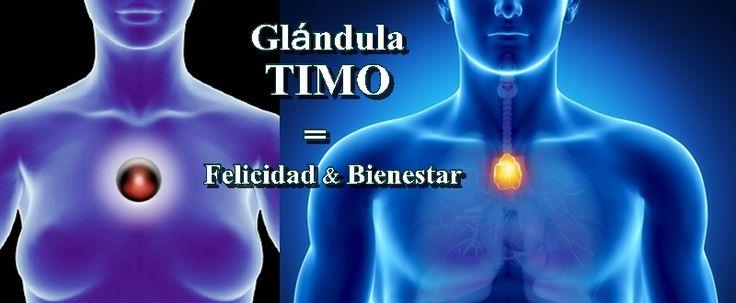 """Su nombre en griego es """"Thýmos"""" y significa ENERGÍA VITAL. La glándula Timo se encuentra en medio del pecho (chakra del corazón) detrás del hueso donde nos tocamos cuando decimos """"yo"""". Ésta es esti…"""