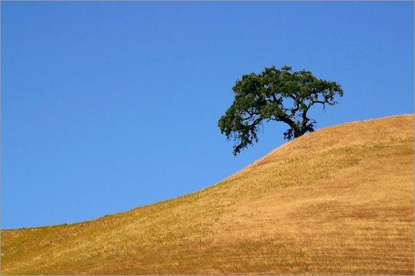63 best CA golden hills images on Pinterest   Landscape ...