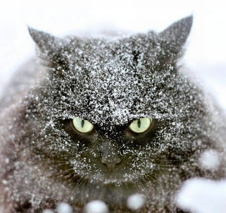 It's snowing and I am outside. You do the Math, cat lady!  This would not be my cat; mine would be in the house curled up by the fire. :)