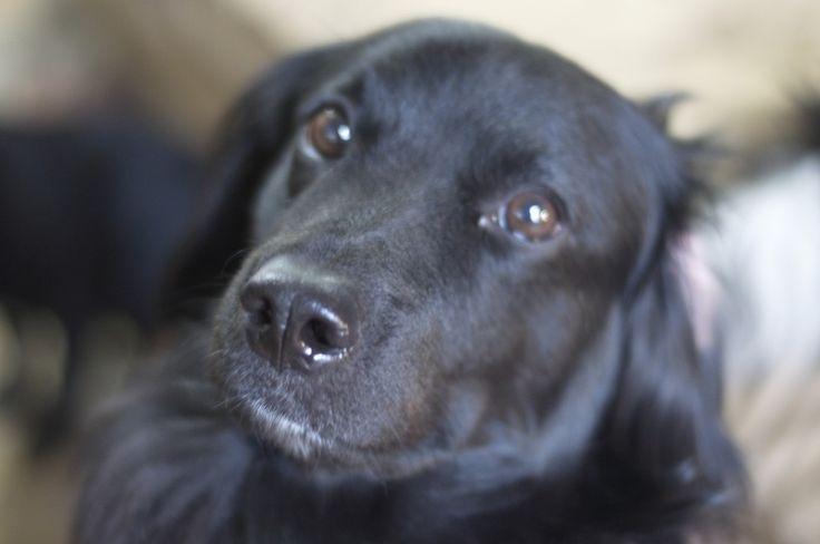 Darwin Dog