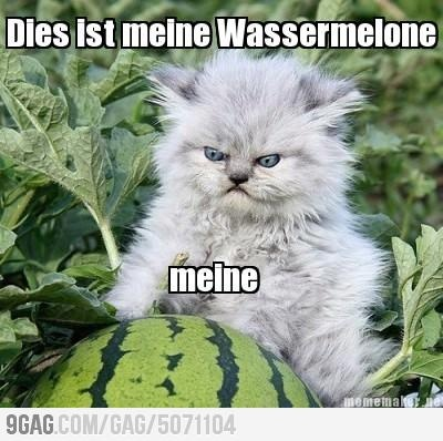 German Kitty watermelon