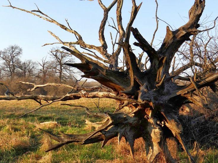 Fák,erdők,parkok.Elbi blogja: A Bezerédi-síkon