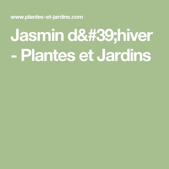 Jasmin d'hiver - Plantes et Jardins