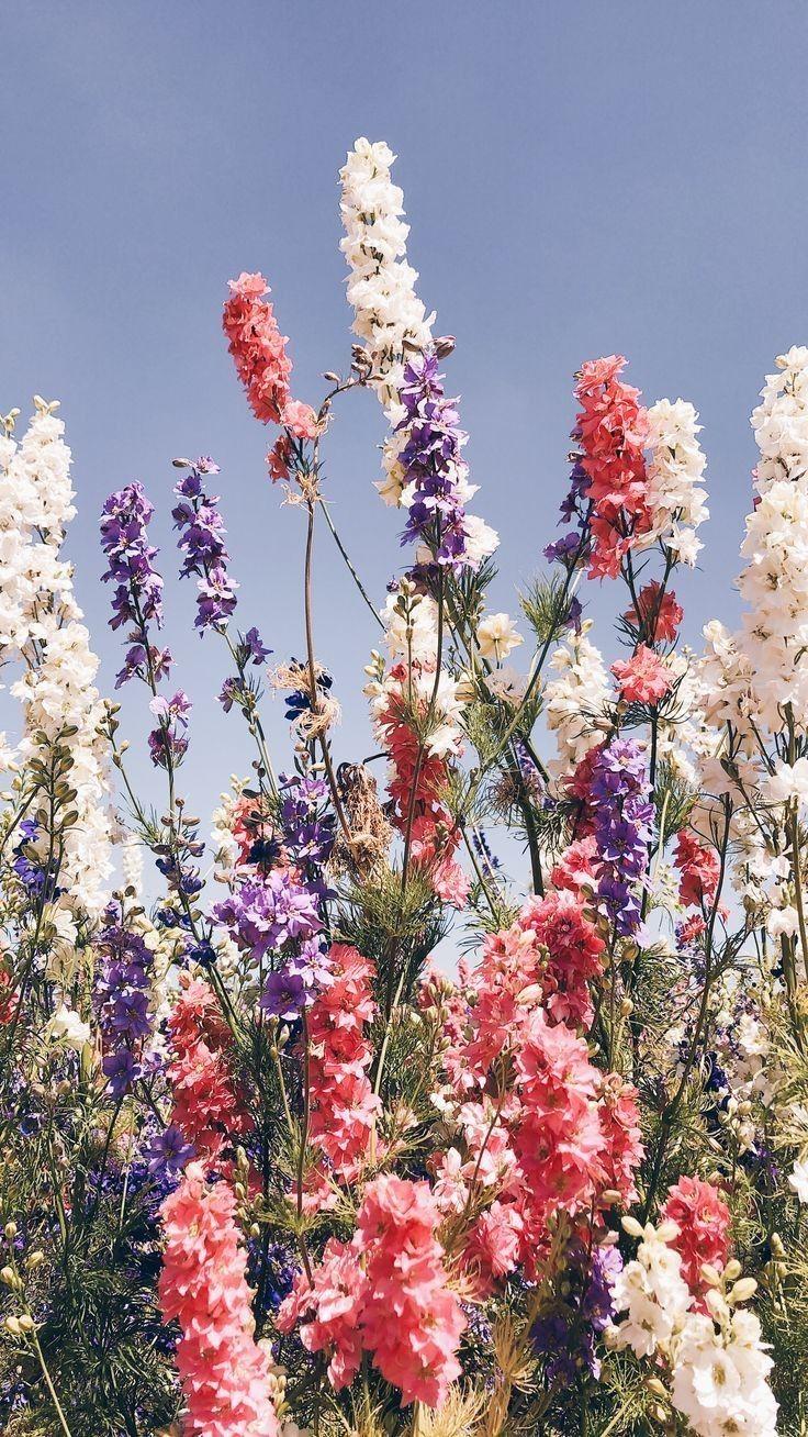 #Rose #Rouge #Tumblr #Esthétique #Bleu #Nature