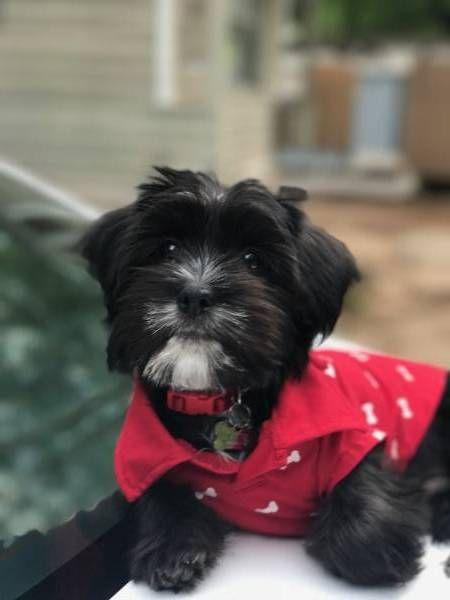 LOST DOG: 06/08/2017 - Union City, Georgia, GA, United States. Ref#: L31373 - #CritterAlert #LostPet #LostDog #MissingDog