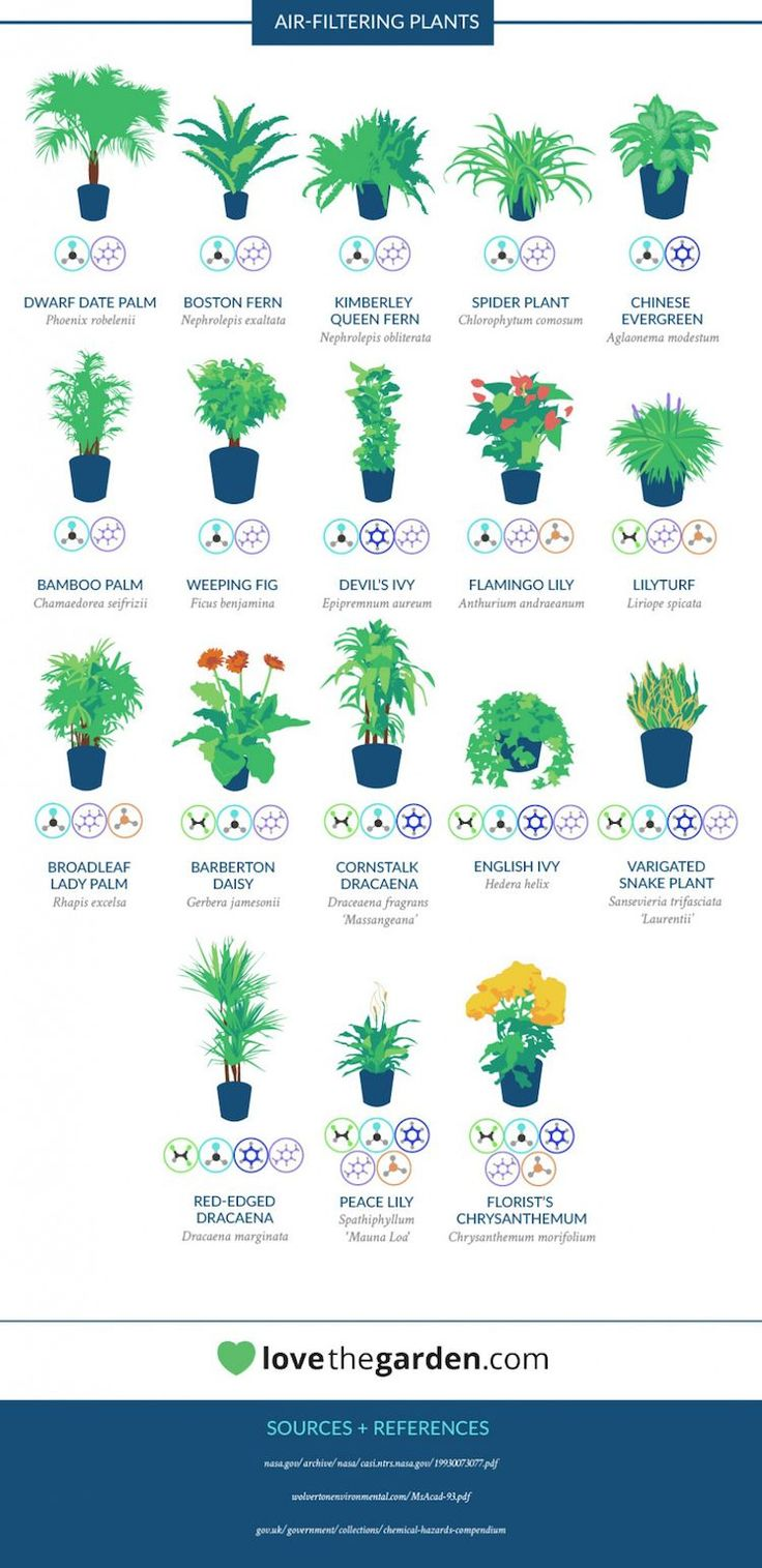 Many of us spend most of our time indoors, so it's important to cultivate a space that's a healthy one. A simple—and beautiful—way to do this is through houseplants; they add some green to your home while being an effective way to purify the air. NASA hardly seems like the organization that would give us …