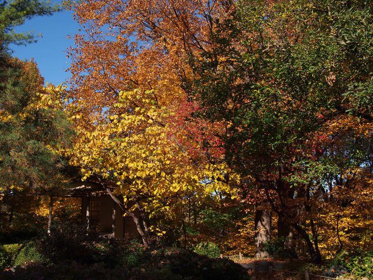 Gorgeous colors // Minnesota Landscape Arboretum