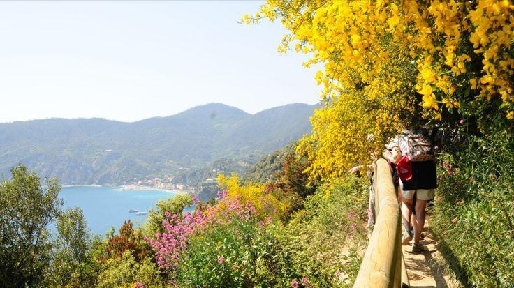Un viaggio di una settimana nella magica atmosfera delle Cinque Terre, tra borghi di pescatori e sentieri ricoperti di fiori selvatici.