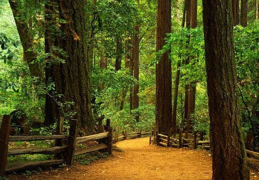 Around Santa Cruz - Henry Cowell Redwoods State Park
