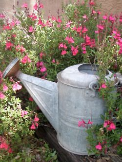 old watering cans!