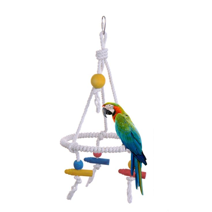 New Design 35cm Pet Parrot Toys Nylon Bird Rope Swing Cages Pet Accessories Products for Parrots Parakeet Cockatiel Dropshipping // FREE Shipping //     Buy one here---> https://thepetscastle.com/new-design-35cm-pet-parrot-toys-nylon-bird-rope-swing-cages-pet-accessories-products-for-parrots-parakeet-cockatiel-dropshipping/    #hound #sleeping #puppies