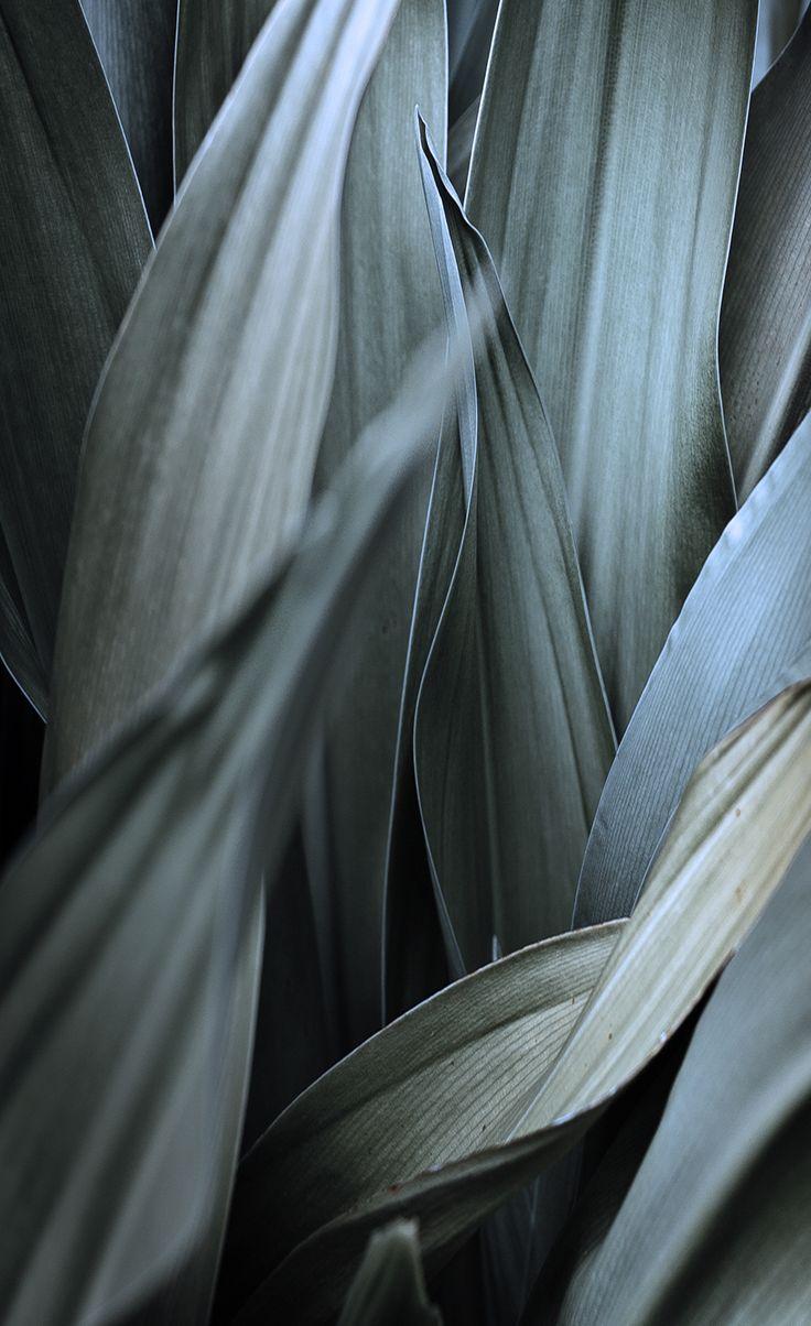 """Grey"" by www.leuchtend-grau.de"