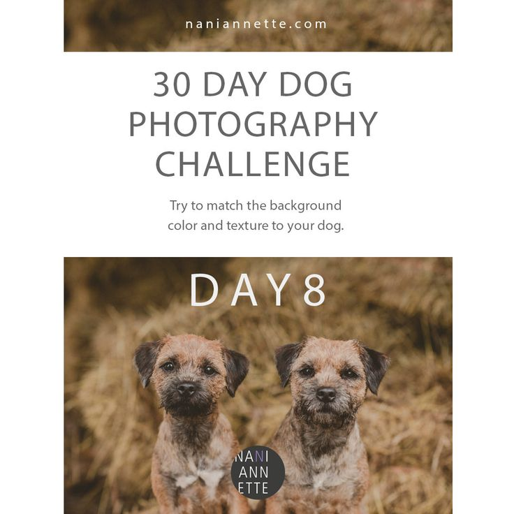 Day 8 of 30 Day Dog Photography Challenge!  Try to match the color and texture of your background to the dog.  Join the fun and share your images using #30daydogchallenge in Instagram.