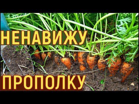 (239) Выращивание УРОЖАЙНОЙ моркови МОЙ СПОСОБ от семян до урожая - YouTube