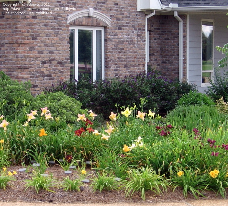 18 Front Yard Landscaping Designs Ideas: 27 Best Trees, Bushes, And Ground Cover, Oh My! Images On