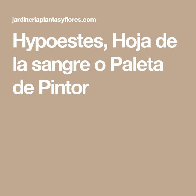 Hypoestes, Hoja de la sangre o Paleta de Pintor