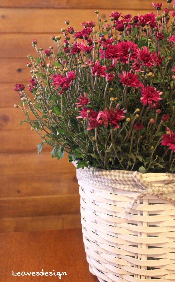 Centro natural campestre de margaritas moradas #todoslossantos #arreglosflorales #margaritas #regalaflores #aromaticas #color #centrosflorales #leavesdesign