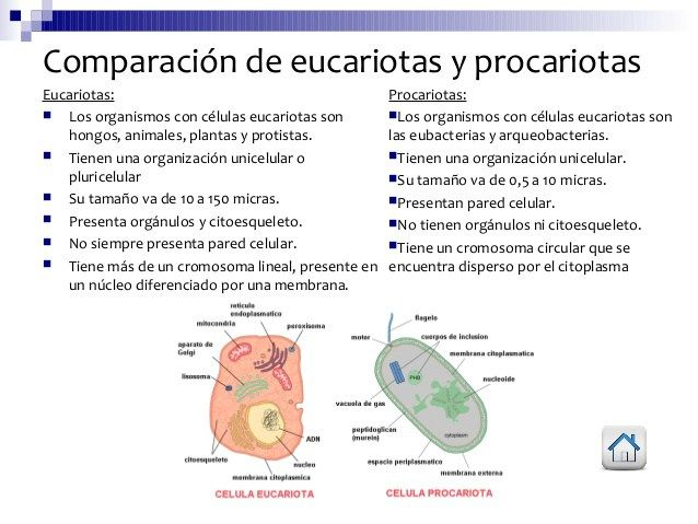 Cuadros Comparativos Entre Célula Procariota Y Eucariota Cuadro Comparativo Procariota Y Eucariota Celula Procariota Y Eucariota Eucariota