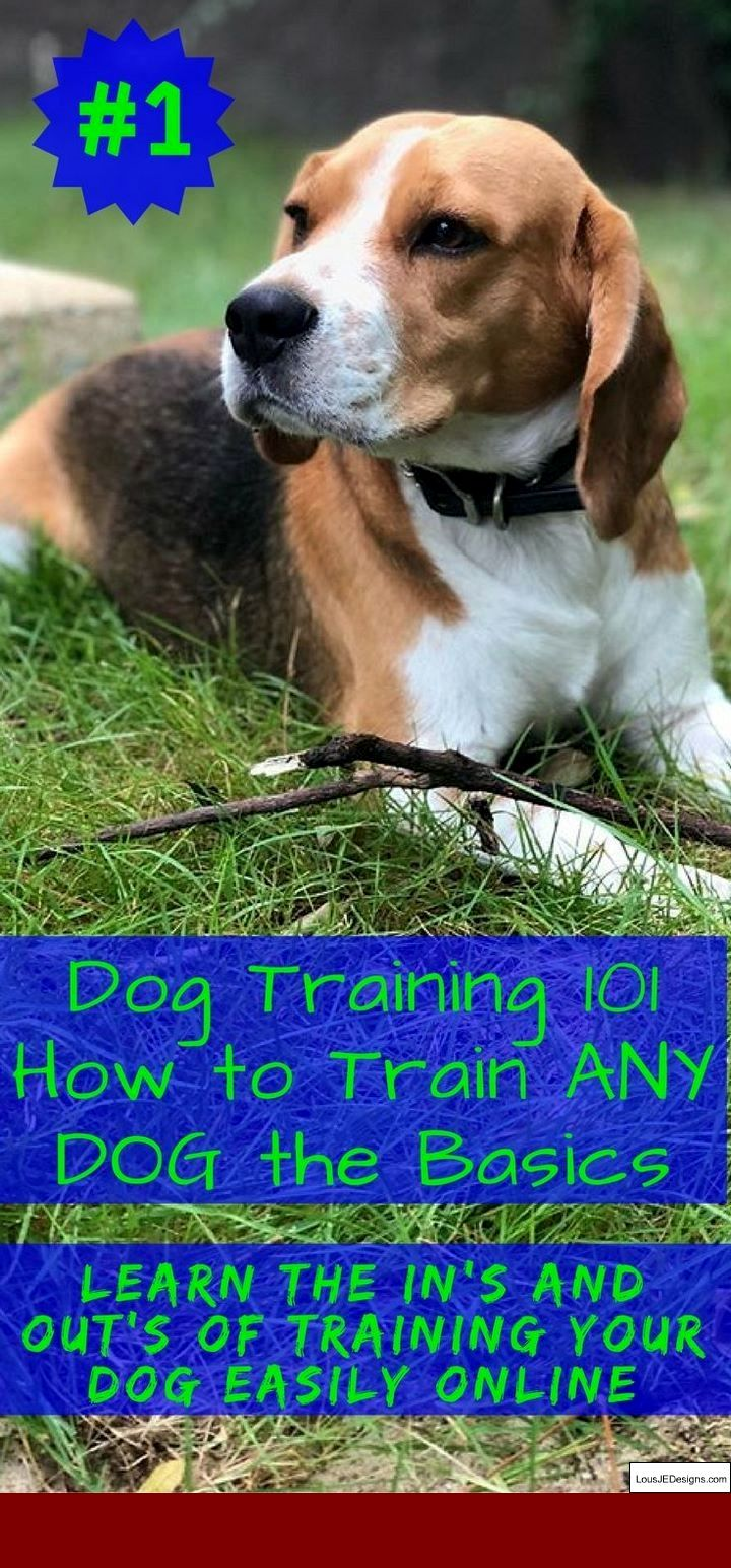 Dog Training Easy Tips And Pics Of How To Leash Train A Dog