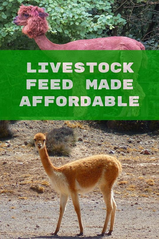 #Feeding #livestock can be challenging. #Hay prices are high, but we have a solution!