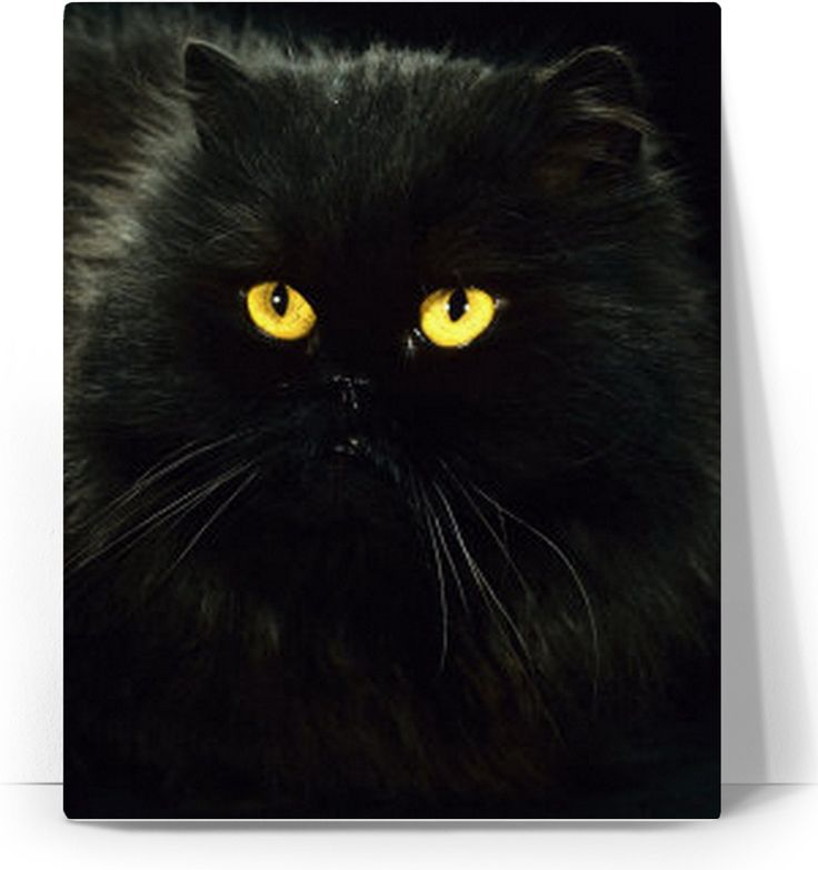 Check out my new product https://www.rageon.com/products/black-cat-art-canvas-print?aff=BWeX on RageOn!