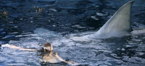 Attaques de requins et élections/ études scientifiques
