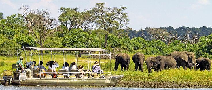 Chobe Day Trip from Victoria Falls, Zimbabwe: enjoy an abundance of wildlife in this world famous Botswana National Park.