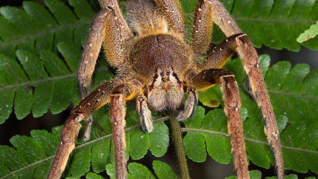 World's deadliest spider alert closes supermarket in UK - CBS News