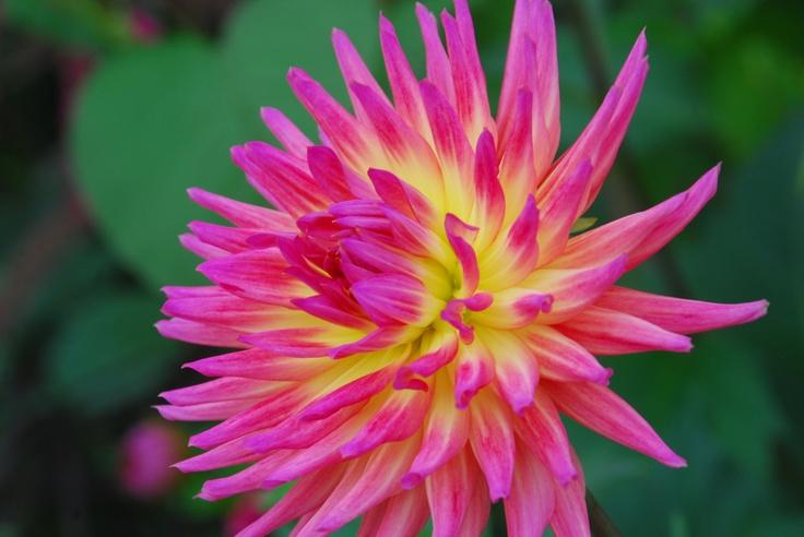 pretty Flower