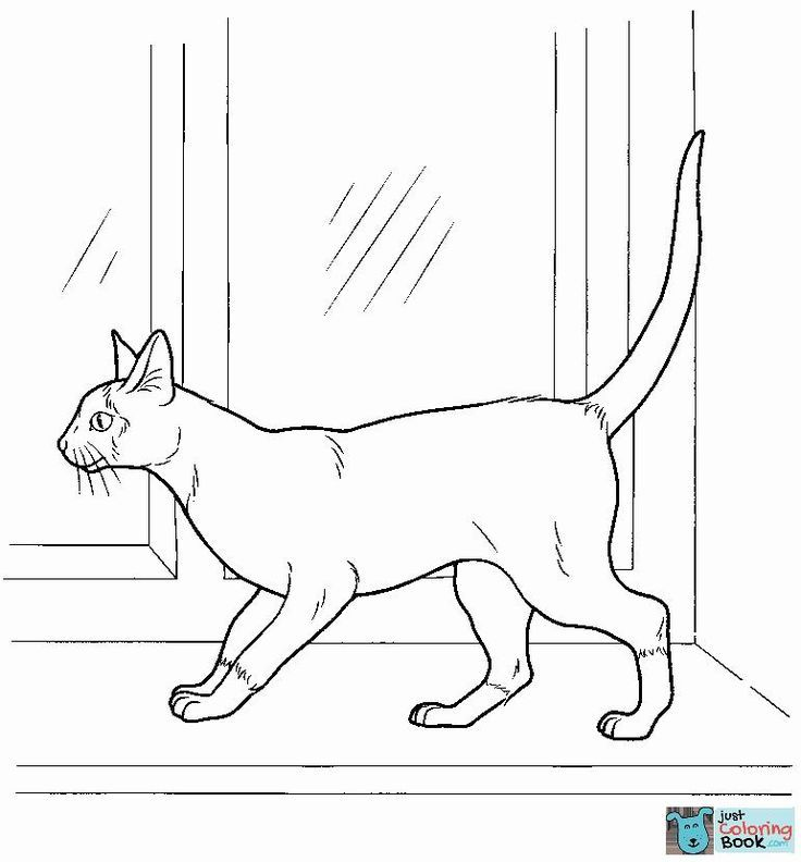 Siamese Cat Coloring Sheets You'll Love