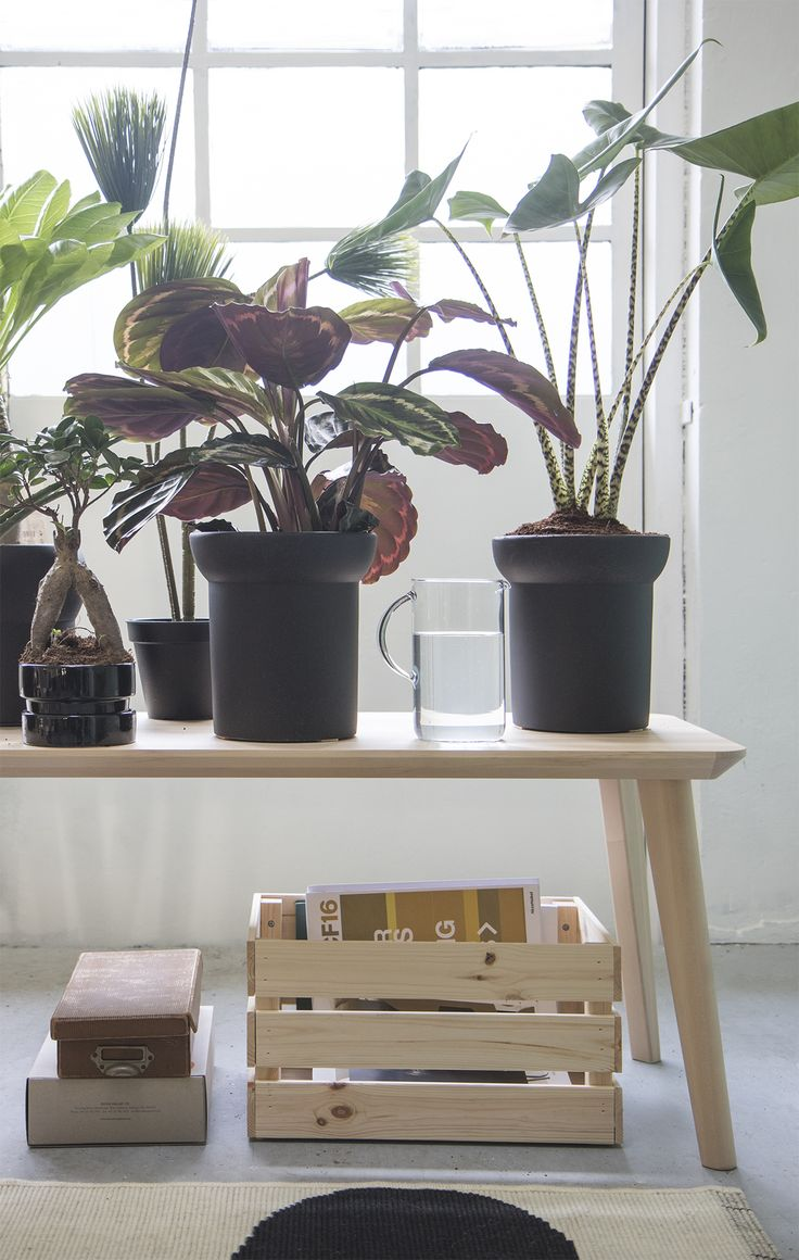 Creëer je eigen moderne botanische tuin 2.0!   #STUDIObyIKEA #IKEA #IKEAnl #planten #vazen #aankleding #interieur