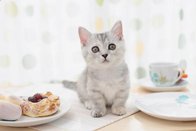 Cats Toys Ideas - The cat cafe, a cross between a coffee shop and an adoption center, can be a profitable animal business. - Ideal toys for small cats