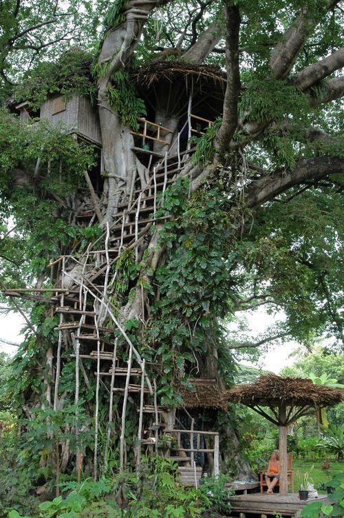 Casa na árvore…                                                                                                                                                                                 Mais