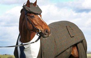 Conoce a Morestead y sorpréndete con el estilo del caballo más elegante del mundo   Virales