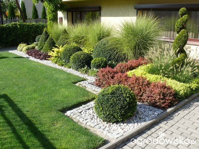 Switchgrass and shaped shrub