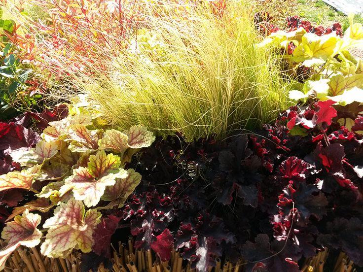"""Conception jardin-""""Les Jardins des Hurlevents """" http://www.plantes-vivaces-hurlevents.com/"""