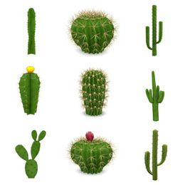 18 Best Baja Wall Images On Pinterest Cacti Plants And