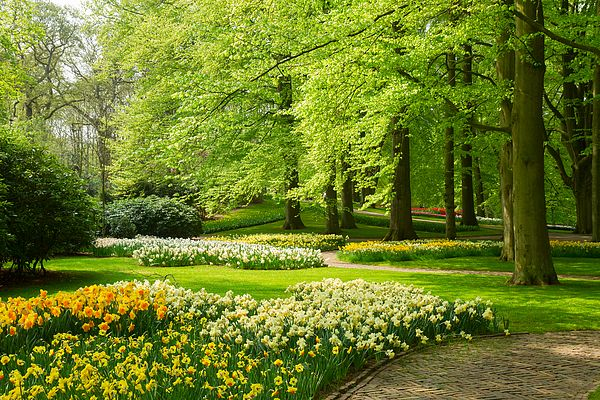 Green grass lawn with trees and daffodils in dutch garden 'Keukenhof', Holland by Anastasy Yarmolovich #Holland #Netherlands #AnastasyYarmolovichFineArtPhotography  #ArtForHome