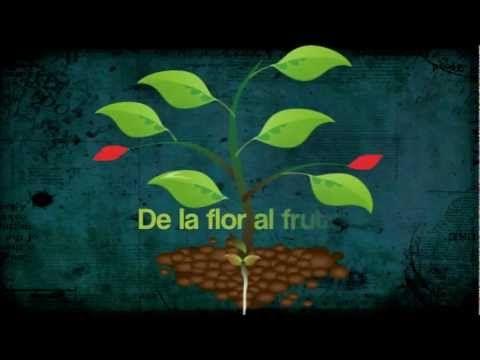 Es ciclo de vida de una planta.