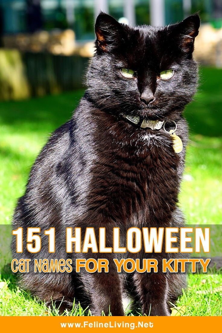 151 Best Halloween cat names for your scary feline