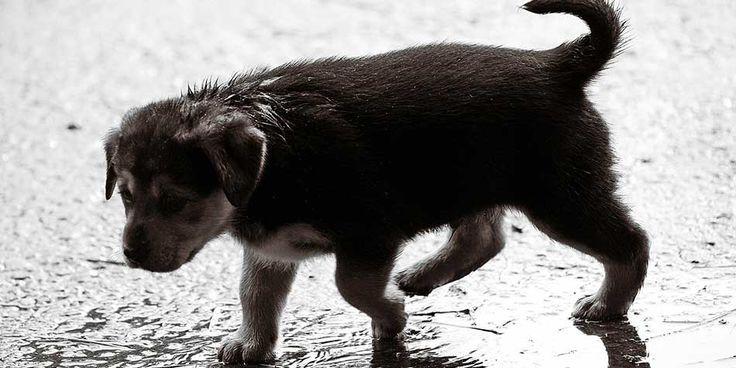 Pet Care Tips For Monsoon