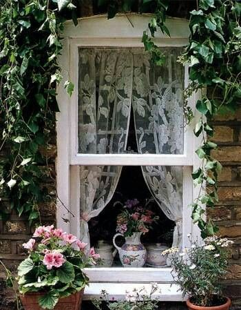 Nostalgia. Lace curtains and a pretty vine . . . .