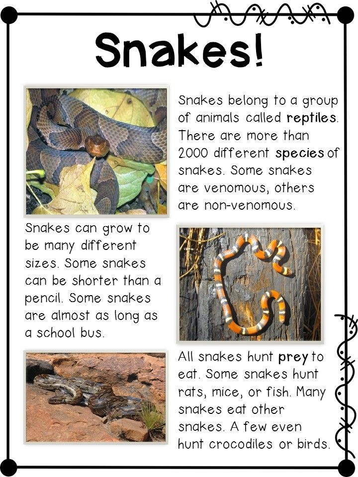 My students love learning and reading about snakes! So many great resources in this packet!