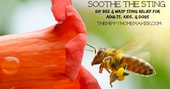 Soothe the  Sting  DIY Bee & Wasp Sting Relief for Adults, Kids, & Dogs - thehippyhomemaker.com