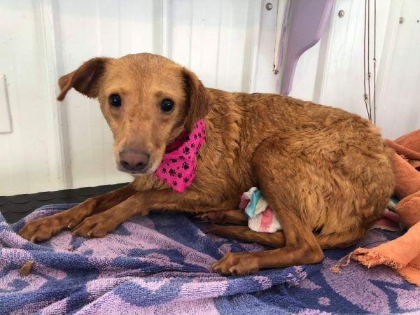 Pets For Adoption Near Edmonton Ab Petfinder Pet Adoption Dog Adoption Pet Search