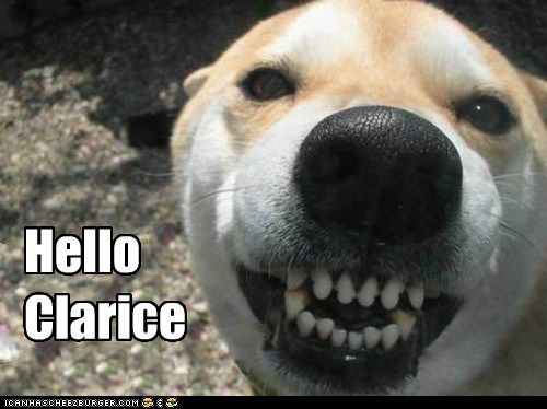 Yikes!: Hello Clarice, Hannibal Lecter, The Faces, Funny Stuff, Dental Care, Funny Faces, Funny Dogs Pictures, Funnydogs, Funny Animal