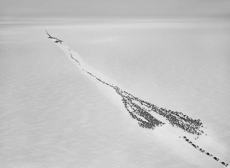 Sebastião Salgado / Gênesis Os Nenets Rússia A travessia do Golfo de Ob para entrar no Círculo Ártico envolve uma viagem de cerca de 50 quilômetros sobre gelo. 2011.