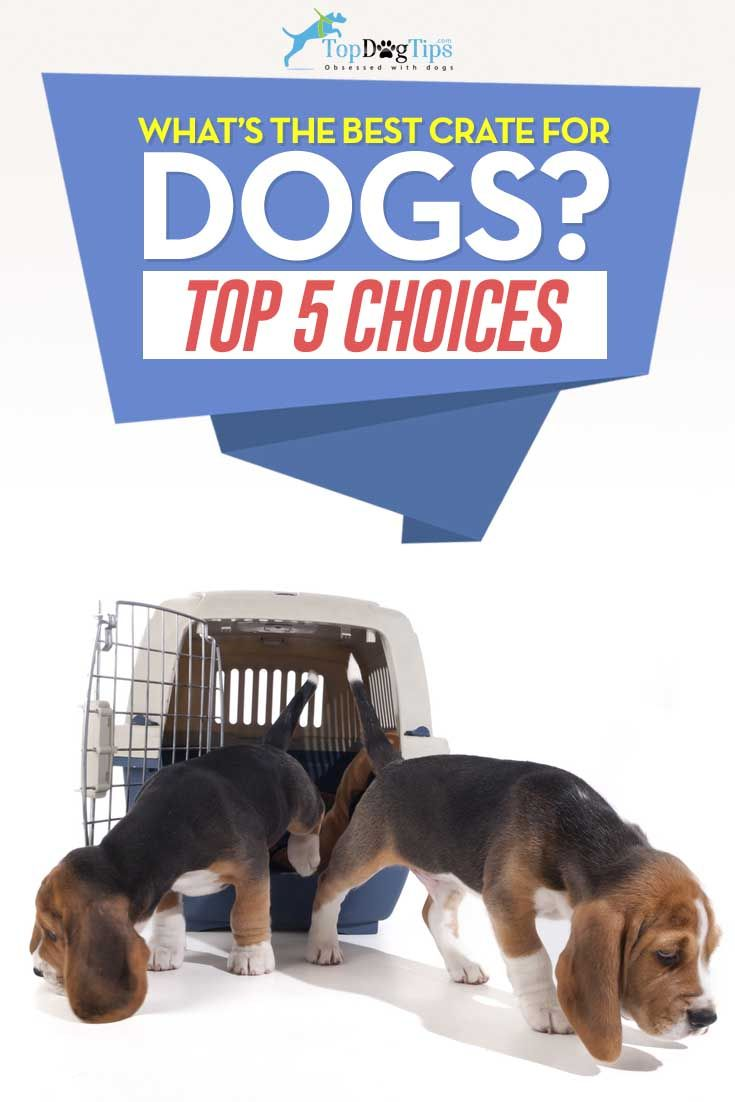 Dog crib for sale philippines - The 25 Best Ideas About Dog Cages For Sale On Pinterest Metal Dog Kennel Diy Dog Kennel And Dog Table