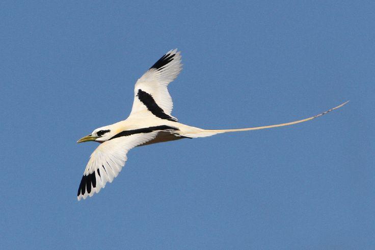 uccelli tropicali - Cerca con Google