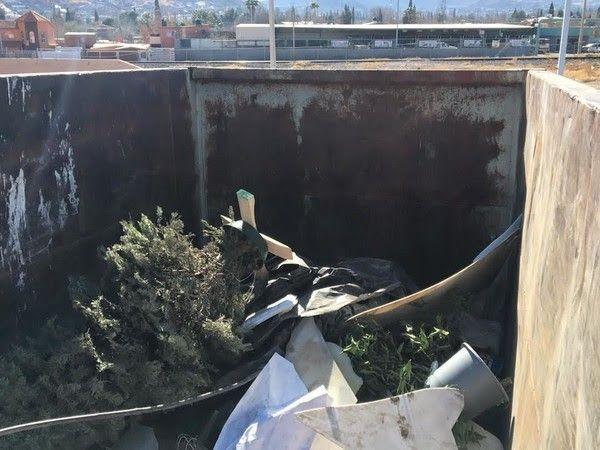 Dispondrá Gobierno Municipal de contenedores para desechar árboles navideños   El Puntero
